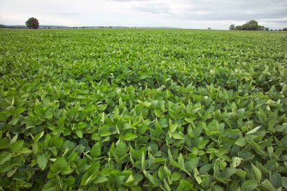 81f6b-soybeans