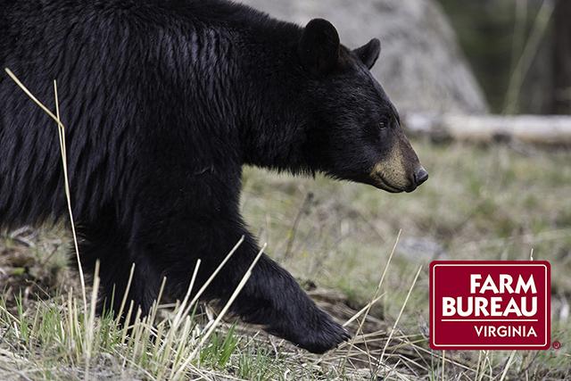 black-bear-1901957_1920