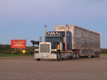 Livestock haule 3