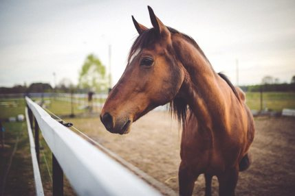 animal-brown-horse-6468