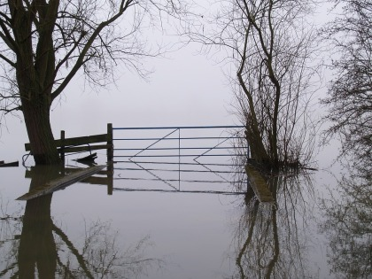 Farm Misty Water Flood Nature Fog Landscape