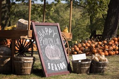 pumpkin-patch-2873348_1920