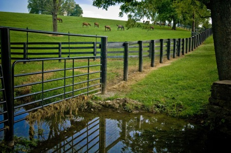 Fencing_livestock_out_of_the_streambed,_Lexington,_KY_(14595300711) (1)